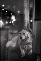 The Dog (Valentine Kleyner) Tags: bw dog night kodaktrix400 film street israel telaviv zorki rangefinder