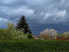 Gewitterstimmung - Thunderstorm mood (fleckchen) Tags: thunderstormmood gewitterstimmung heimat garten wolken himmel bäume landschaft landschaften clouds sky früling springtime spring