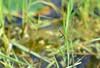 DSC_7017 (nporeginald) Tags: nikon d600 nikkor afs 2470 2470mm f28 g ed taiwan tainan 台灣 台南 府城 台南都會公園 奇美博物館 公園 踏青 郊遊 植物 生態