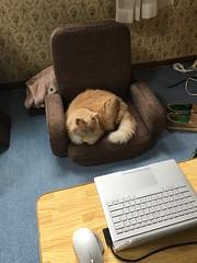 Need to Get More Chairs (sjrankin) Tags: 28june2018 edited animal cat norio chair floor kitchen computer shoes yubari hokkaido japan