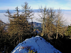 Hairy summit (Vid Pogacnik) Tags: karavanke karawanken karawanks austria topica outdoors hiking landscape mountain trees larches