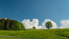 landscape St.Georger-Str. 3.)1805-3289 (dironzafrancesco) Tags: bäume tamron tamronsp2470mmf28diusd slta99v sony wasser natur stgallen sanktgallen schweiz ch
