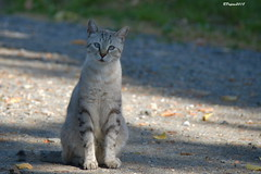 Interrogatif (BPBP42) Tags: chat car katze animal