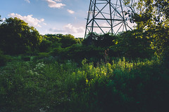 encounters. (jonathancastellino) Tags: toronto donvalley trail tree trees green tower nature culture electricity sky cloud clouds plant flower