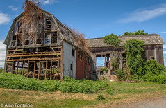 dilapidated barn 3 (Al Fontaine) Tags: oldbuildings old barn dilapidated structure structures farm building disrepair textures nature ivy vines clouds blue bluesky green