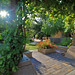 Grapevine View