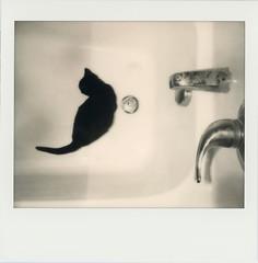 ellie (kaumpphoto) Tags: polaroid instant monochrome cat tub bath spout abstract spectra drain steel stainlesssteel handle white explore tail feline curious