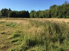 Ashford Green Corridor - Little Burton (beforeyoureyes) Tags: ashford green corridor kent uk meadow set aside