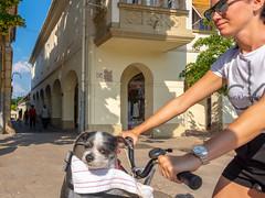What are You looking at ? - Was kuckst du ? (ralfkai41) Tags: streetphotography papa ungarn bicycle fahrrad personen hungary funny people snapshot stadt streetfotografie schnappschus witzig manschen hund haustier dog