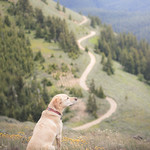 Summit dogs on Chumstick Mountain thumbnail