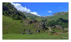 Direction Cormet de Roselend (Ylliab Photo) Tags: ylliabphoto ylliab alpes artistephotographique canon cloud mountain montagne savoie vache cow rhônealpes barrederoselend roselend