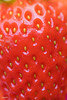 Macro of yummy strawberry background (rawpixel.com) Tags: background berry closeup delicious dessert detox diet energy food fresh freshness fruit healthy ingredient juicy macro name natural nutrition nutritious organic pattern raw red refreshment ripe season seasonal seed seeds strawberry sweet taste tasty texture textured tropical vitamin wallpaper yummy