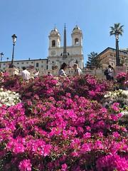 Ab Urbe Condita. Today the Capital celebrates its 2771st birthday.  Happy birthday Rome. ❤️ (maresaDOs) Tags: natalediroma roma rome compleanno happybirthday azalee trinitadeimonti scalinata 2771 2771st birthday birthdayrome flower blumen flores