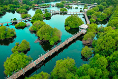 Mangrove (IAM FE) Tags: nature aerial mangrove trees waterscape landscape