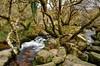 The West Dart River, Dartmoor (Baz Richardson (catching up again)) Tags: dartmoor dartmoornationalpark devon westdartriver rivers streams huccaby rocks trees