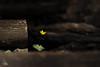 Pochtenfälle Selection (Ukelens) Tags: ukelens schweiz bern swiss switzerland suisse svizzera sun sunbeam sunstream sunset sunlight sunrise sonne sonnenschein sonnenstrahl spring frühling valley suldtal aeschi woodland wood forest forests wald wälder pflanze pflanzen blume blumen flowers flower nature natur