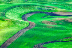 Curves and Swoops (Kirk Lougheed) Tags: palouse steptoe steptoebutte usa unitedstates washington farm farming field landscape outdoor spring