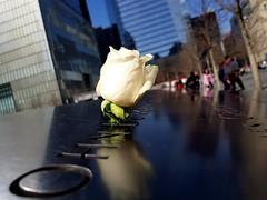 World Trade Center (valeriaconti136) Tags: newyork worldtradecenter memories rose viaggio ricordo samsungs8