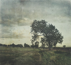 one left (jssteak) Tags: canon t1i field farm horizon morning tree fenceline clouds distressed aged grunge