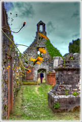 Nature reclaims (bob the bolder) Tags: uk scotland dumfries galloway anwoth oldkirk ruin flower listed cata