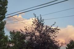 Power Lines & Sunset Skies Pt. II (Miss Marisa Renee) Tags: marisarenee canon canon5dmarkii broomfield colorado sunset sunsetskies trees alley skies sky alleyway powerlines pastel pretty june2018 june 2018 mywork series threeparts clouds dreamy