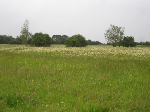 Callows hay-meadow and willows. Photo by Micheline Sheehy Skefffington.
