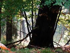Autumnal illuminate (Jacek Magryta) Tags: jacek autumn illuminate zielonka zielonkavillage zgorzeleccounty borydolnoslaskie tree water nature colours landscape lowersilesia light lower poland polska forest