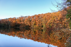 Autumn reflections (syl20_44) Tags: atlantique autumn black chapelle colours coming country dark day erdre france la land leaves loire mirror orange reflections rural sad sadly scape shadows sky sur tree trees water white winter yellow mouline mirrorreflection