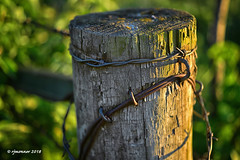 Corner Post_187637 (rjmonner) Tags: post fence farming fencefriday field farmland wire barbedwire barbed rural rustic rust sunset summer sundown summertime country corner brace remnant remote grass grasses agriculture agronomy abandoned agricultural agronomic aged acreage acres weathered mold texture textured steel staple coil wood green weeds