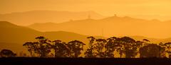 Trees, some natural, some man made (ajecaldwell11) Tags: xe3 ahuririestuary ankh hills fujifilm light trees hawkesbay silhouette napier layers sky newzealand ahuriri caldwell orange clouds