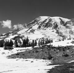 Mt. Rainier National Park (Summer_Xsheng) Tags: rainier mtrainier hasselblad foma