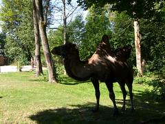 Tierpark - Falkenstein / Vogtland (Seesturm) Tags: 2018 seesturm germany deutschland saxony sachsen vogtland falkenstein tierpark präriehunde nandus kamele ziegen schweine waschbären schnecken esel