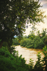 Tree and River (dejankrsmanovic) Tags: tree leaf river nature landscape cinematic outdoor growth green summer season weather climate serbia balkans water bush twig branch concept conceptual day seasonal place destination rural nonurban country countryside natural land ground