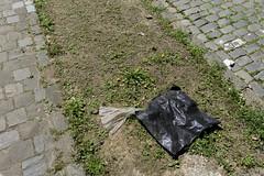 Raie Manta (misterblue66) Tags: a6000 sony uccle pollution plastique plastic overpollution mimicry mimétisme paréidolie manta raie mantaray raiemanta dechet waste