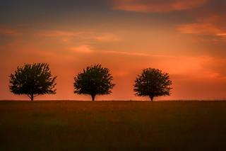 Three Trees...