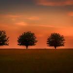 Three Trees... thumbnail