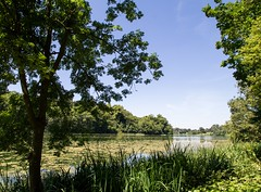 View of a lake at Blenheim Palace (Rachel Harding Photography) Tags: blenheimpalace palace gardens lake water reflections trees summer blueskies wideangle canoneos1100d
