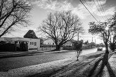 Park Avenue morning winter sun F-2023 (NZL365) Tags: parkavenue lowerhutt wellington newzealandlife blackwhite blackandwhite pentaxmx1 pentaxians 365photochallenge 365days 365project project365