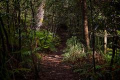 South Lawson Waterfall Circuit (Eddy Summers) Tags: pentaxk1 pentaxaustralia pentax k1captures k1landscapes landscape lawson bluemountains bluemountainsnationalpark nsw australia pixelshift fa50mm15 fa50mm cpl circularpolarizer bokeh path walk forest
