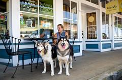 Sue, Lohelani, & Juneau @ Honoka'a (JUNEAU BISCUITS) Tags: husky siberianhusky pet dog animal honokaa bigisland hawaii hawaiiphotographer nikon