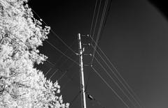 Wires Against a Clear Sky (Neal3K) Tags: ir infraredcamera kolarivisionmodifiedcamera henrycountyga georgia bw blackandwhite