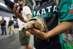 Autocon NY 2018 (doitJEFFSTYLE) Tags: ny newyork autoconny autocon canibeat superstreet dsport stance stancenation turtle