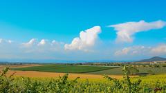 A-LUR_6410 (OrNeSsInA) Tags: panicale paciano trasimeno umbria italia italy natura panorami landescape