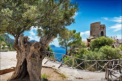torre del verger (heavenuphere) Tags: torredelverger torre verger banyalbufar mallorca majorca balearicislands islasbaleares spain espana island europe serradetramuntana sierradetramontana mountain range coast coastal landscape mediterraneansea sea water nature view old tower olive tree 24105mm