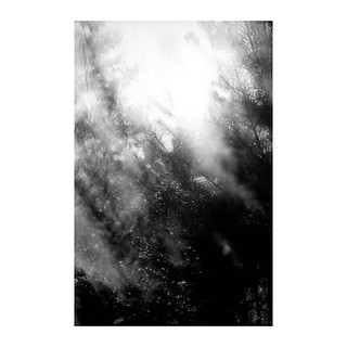 . . . . . #shootfilm #filmphotography #bw #bwfilm #streetphotography #filmcommunity #nikon #nikkor #nikonf2 #micronikkor #nikkor50mm #fomapan #foma #fomapan100 #fomapan100 @400 @fomapanfilm @adox_official #rodinal #push #pushfilm #borderlands