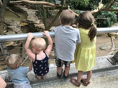 "Cousins at Brookfield Zoo • <a style=""font-size:0.8em;"" href=""http://www.flickr.com/photos/109120354@N07/43501619632/"" target=""_blank"">View on Flickr</a>"