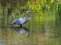 P7181132 (brianwall9) Tags: reifel bird sanctuary nature