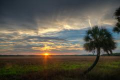 Florida Prairie Sunset (ap0013) Tags: florida sunset prairie myakka river state park palm floridasunset myakkariver statepark sarasotaflorida sarasota fl fla