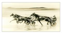 Wait for me ! (Briren22) Tags: chevaux plage mer sable courses