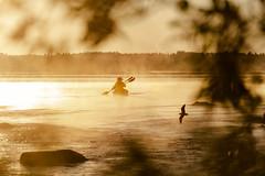 canoeing in the morning (VisitLakeland) Tags: finland summer aamu auringonnousu canoe järvi kanootti kesä koskenniska koski lake luonto maisema meloa melonta morning nature outdoor paddle river scenery shore sumu sun sunrise vastavalo virta water